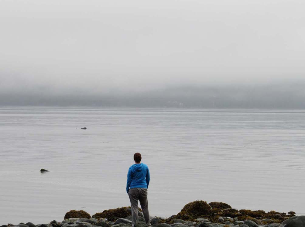 porpoise watching orca camp vancouver island