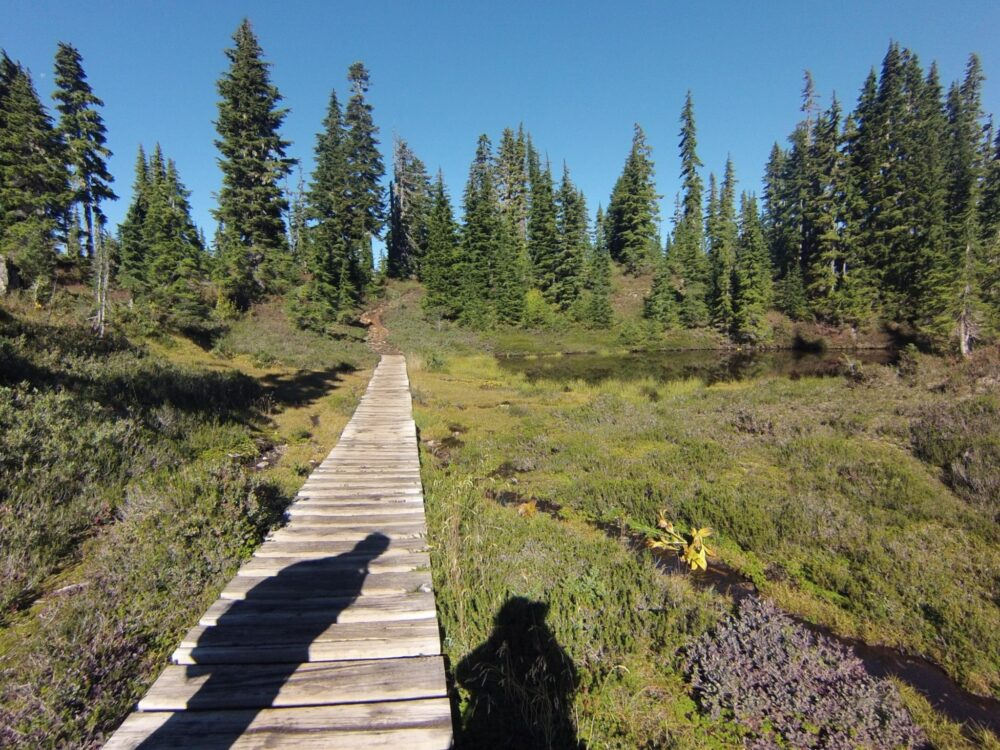 Boardwalk and shadows on the way to Circlet Lake