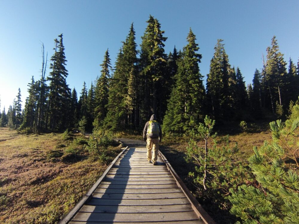 jr hiking paradise meadows boardwalk