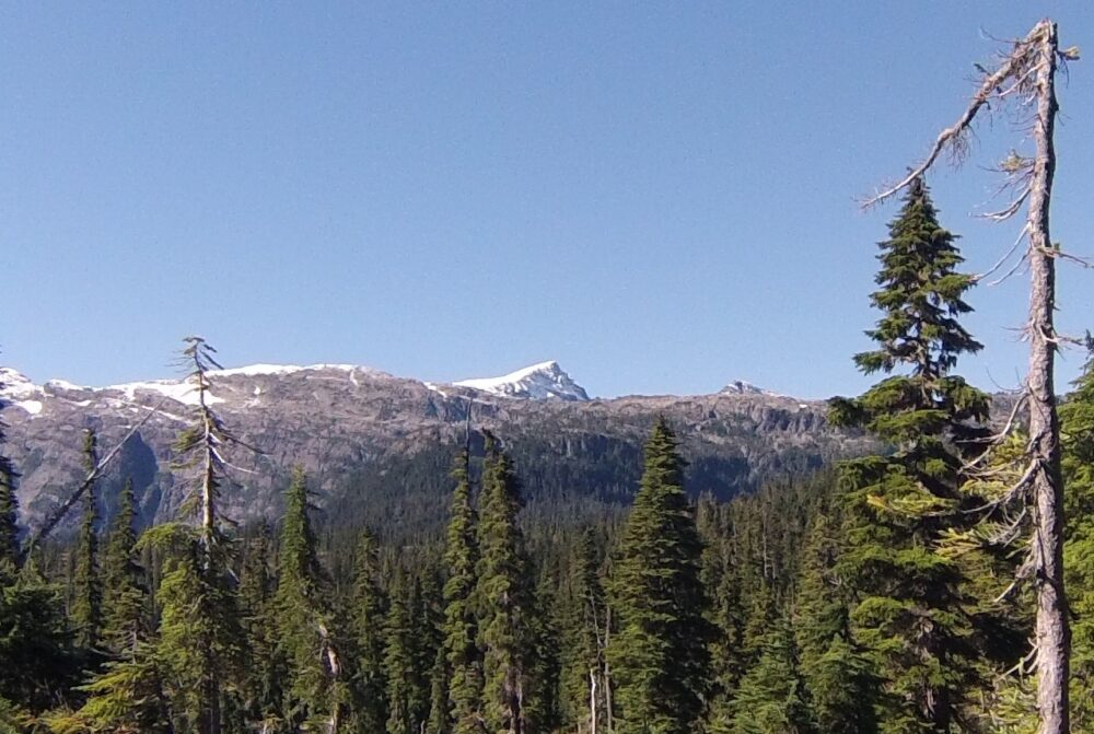 A snow capped peak above forest