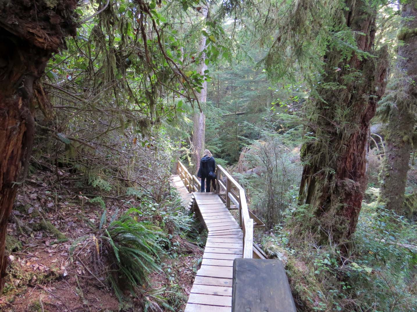 Exploring old growth forest in Tofino