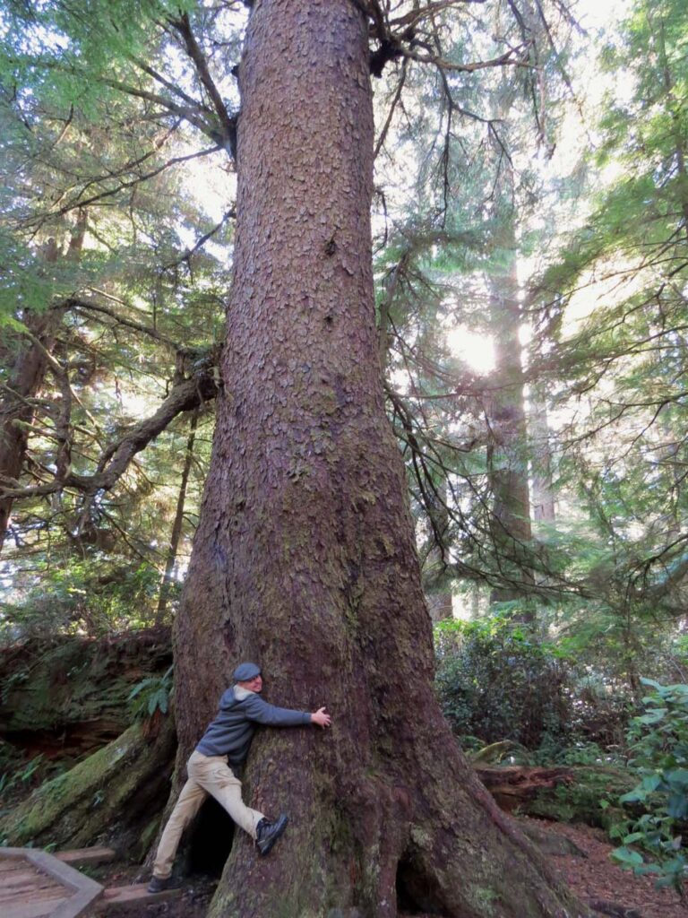 JR and old growth tree