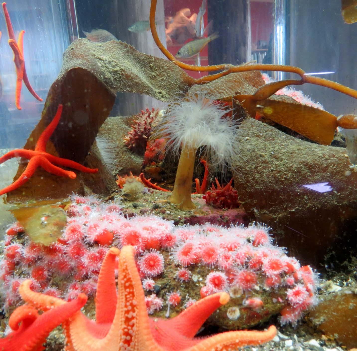 Ucluelet Aquarium display
