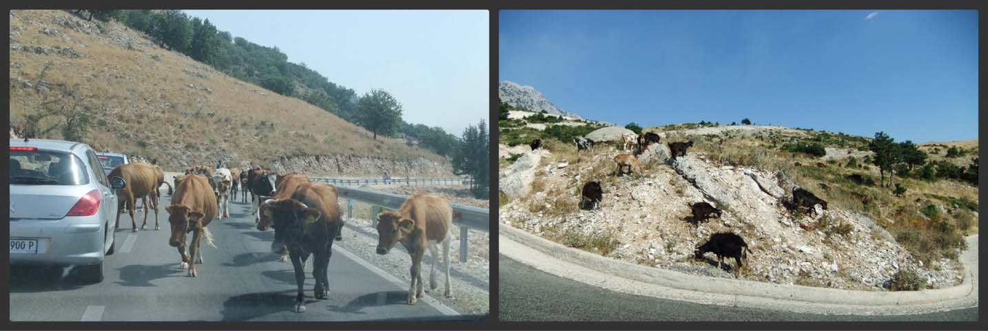 3 of the best European road trip destinations-albania animals on the road