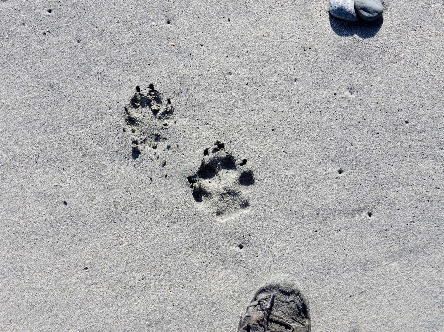 Cape Scott Provincial Park hike Nissen Bight wolf tracks