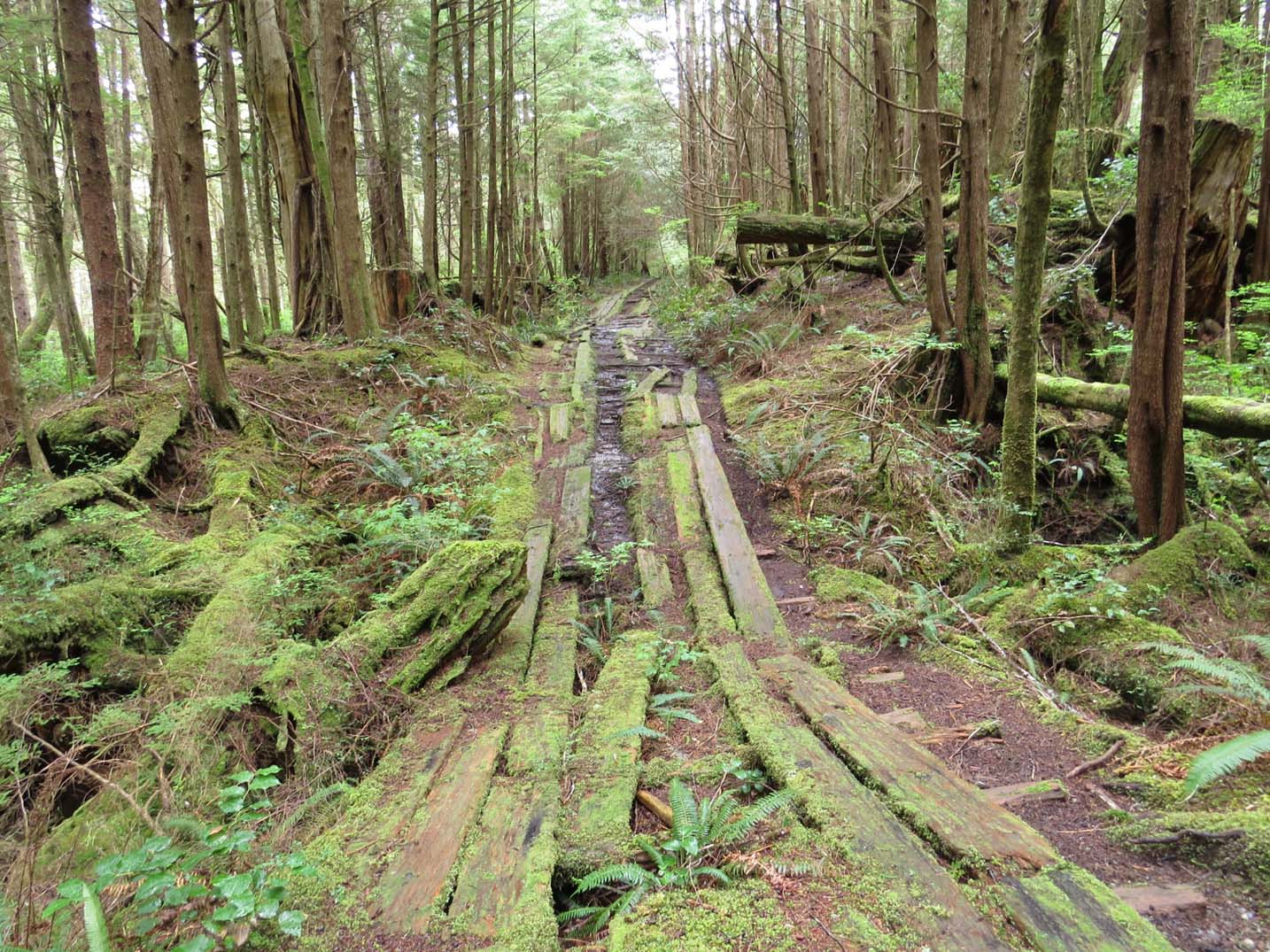 Mossy planks leaving into forest