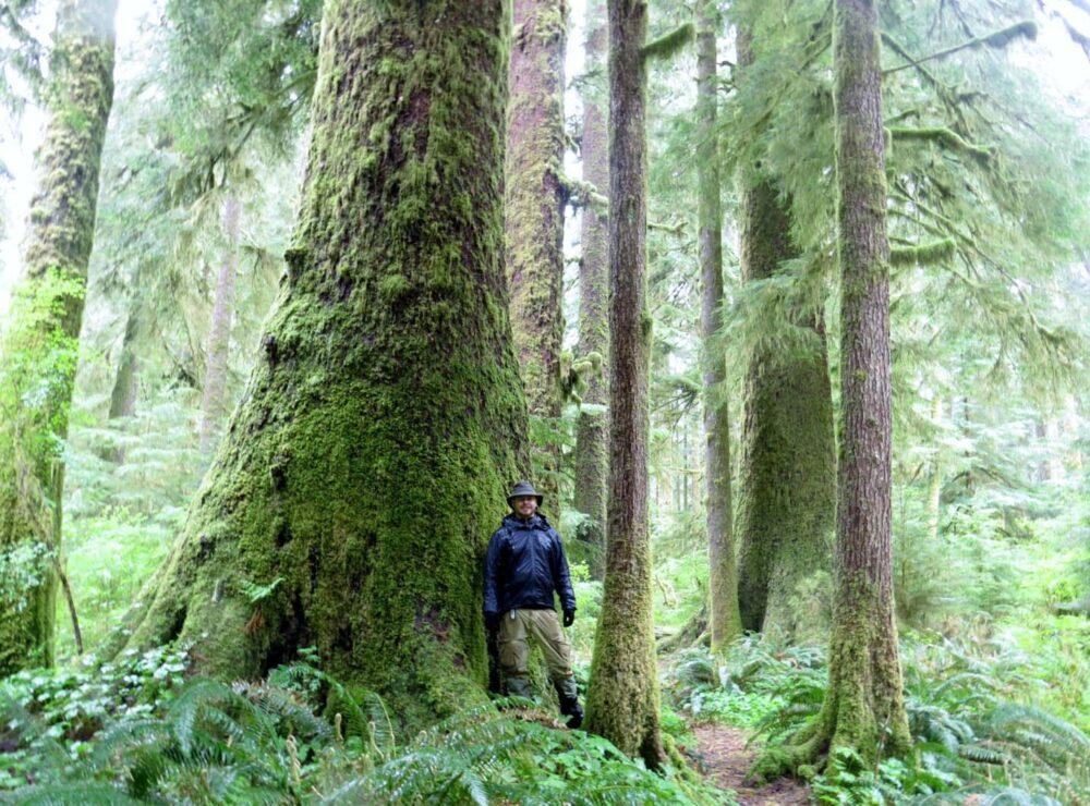 Carmanah Walbran Provincial Park - Walking amongst giants
