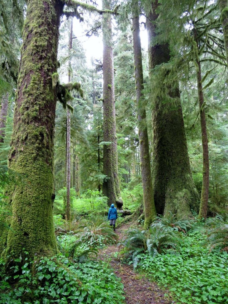 Exploring Carmanah Walbran Provincial Park on our road trip