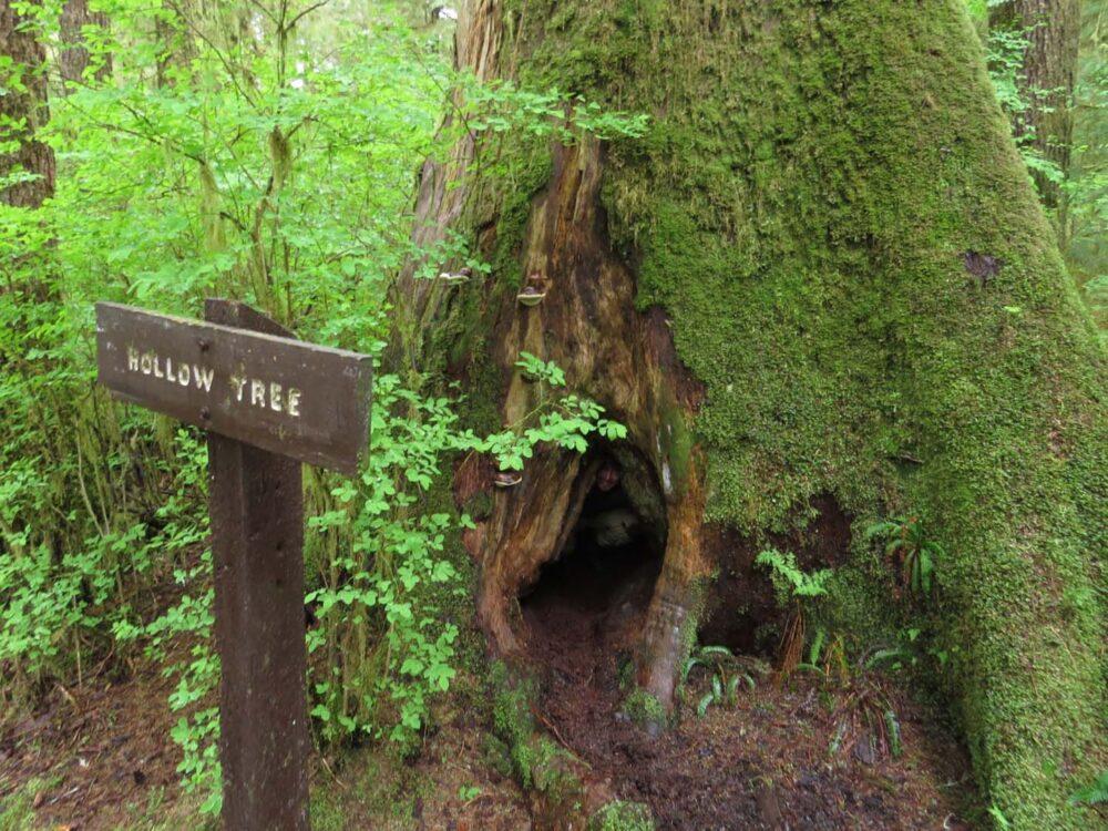Carmanah Walbran Provincial Park - Hollow tree