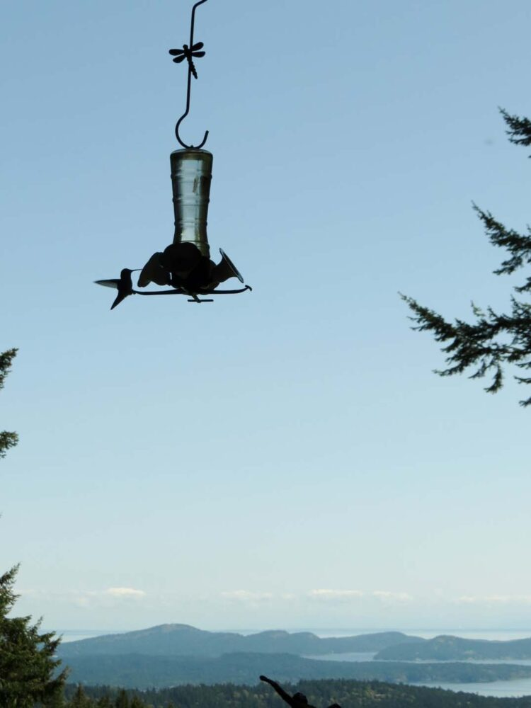 Salt Spring Island view hummingbird