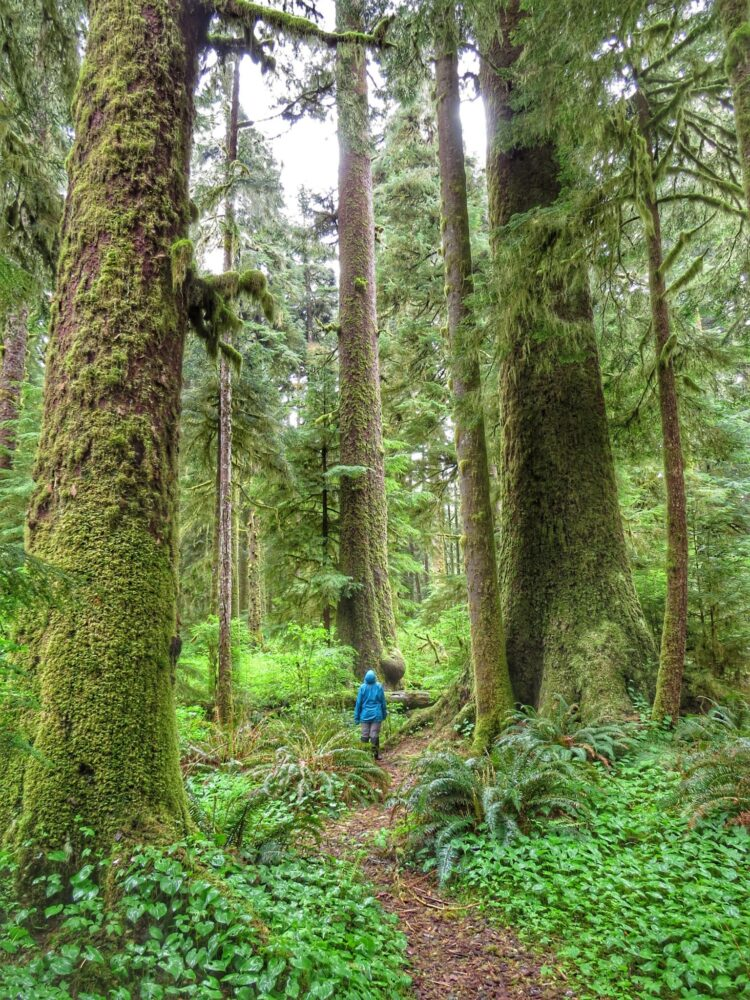 Gemma standing amongst huge trees, moss and rain in Carmanah Walbran Provincial Park, Vancouver Island