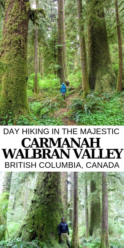While there are other places on Vancouver Island to see old growth trees, the Carmanah Walbran Valley is home to the biggest and best collection of huge trees, including Douglas Fir, Red Cedar and Sikta Spruce. It's a slow and bumpy ride out there, but a pristine rainforest awaits you. Click here to discover more about this magical place on Vancouver Island, British Columbia. offtracktravel.ca