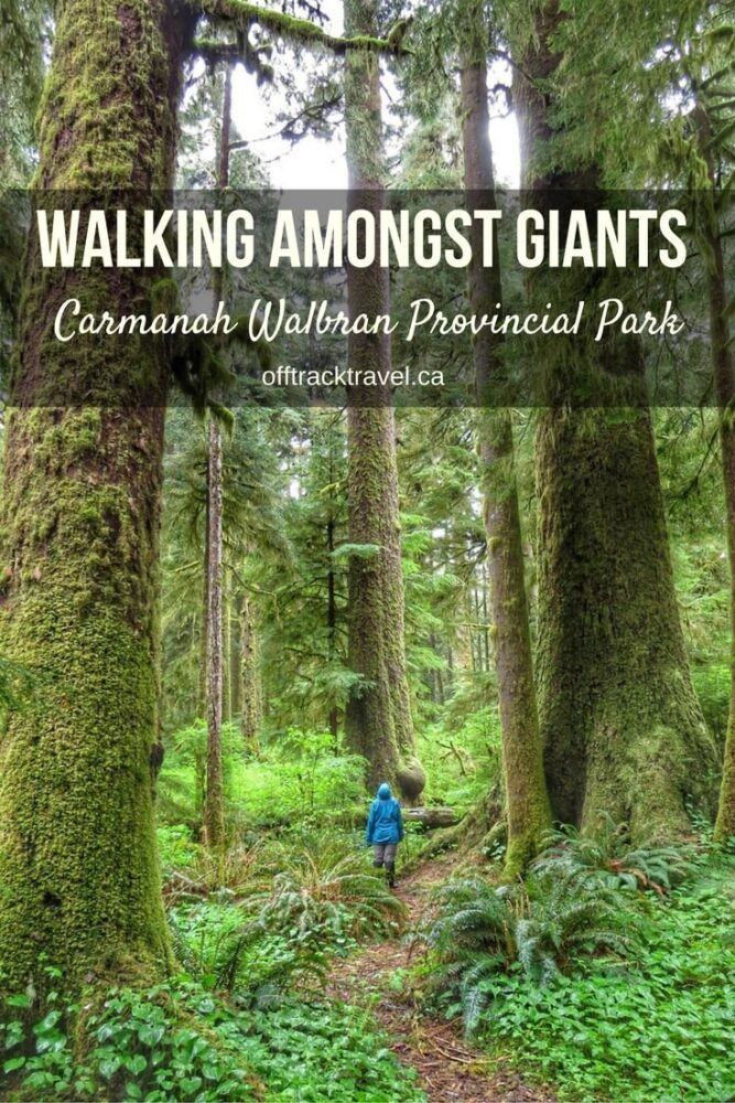 Visit Carmanah Walbran Provincial Park on Vancouver Island's West Coast to experience a cathedral of trees. Some of the tallest and biggest trees in the world can be found here. A magical hiking experience like no other! - offtracktravel.ca #hiking #nature #vancouverisland #canada