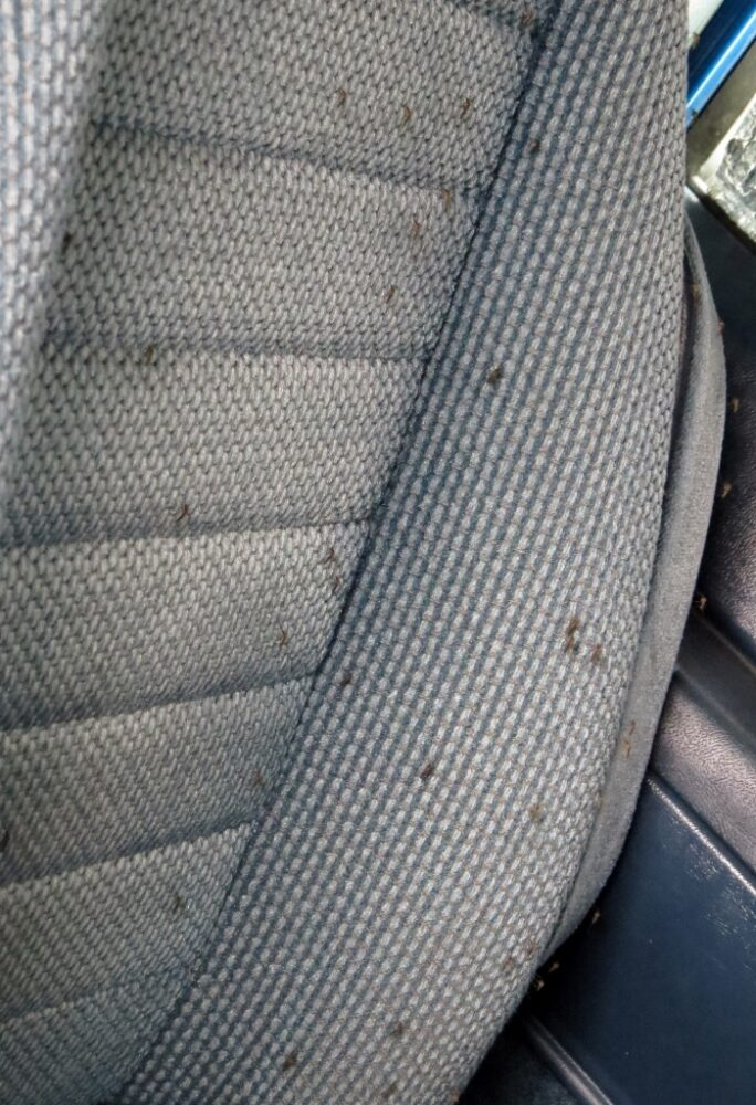 Dozens of mosquitoes on car seat