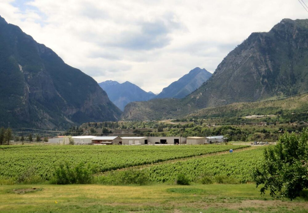 Vineyards surrounded by mountains in Lillooet, BC