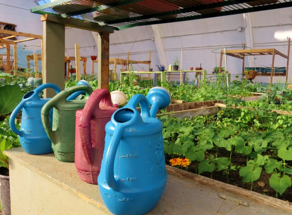 Colourful watering cans in front of raised gardens