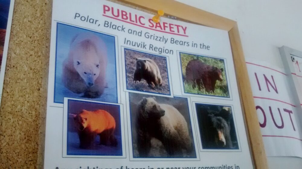 Public safety warning sign for polar bears in the Inuvik area