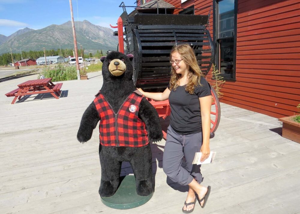 Bear at Carcross Station