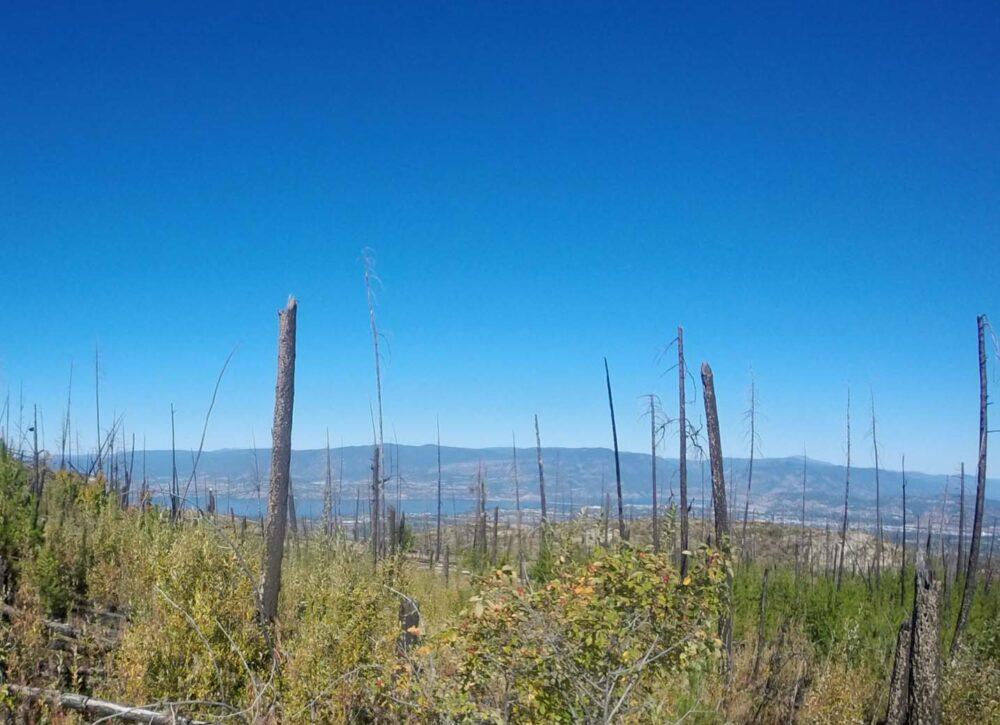 Myra canyon burnt forest