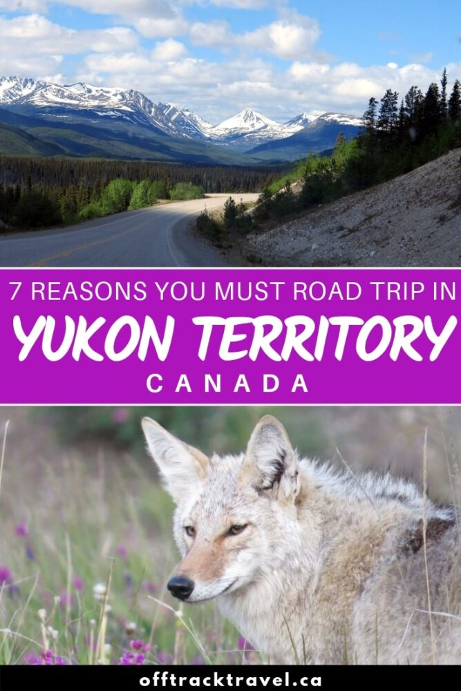anada has some pretty awesome road trip opportunities across the country but Yukon Territory may be the ultimate grand tour destination. A drive here features unbelievably wild landscapes, quiet roads, the chance to see captivating wildlife and more. If you like road trips, Yukon should definitely be next on your list and here are seven great reasons why! offtracktravel.ca