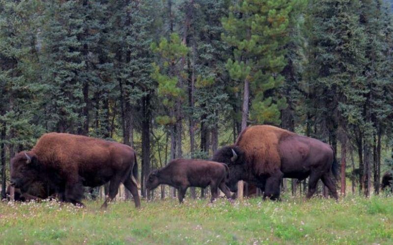Our Western Canada Road Trip: Alaska Highway