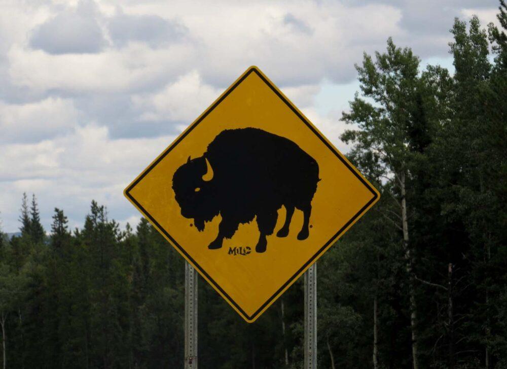 Bison warning sign on Alaska Highway