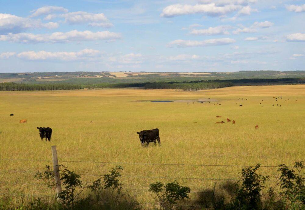 Farmland near Dawson Creek Tumbler Ridge