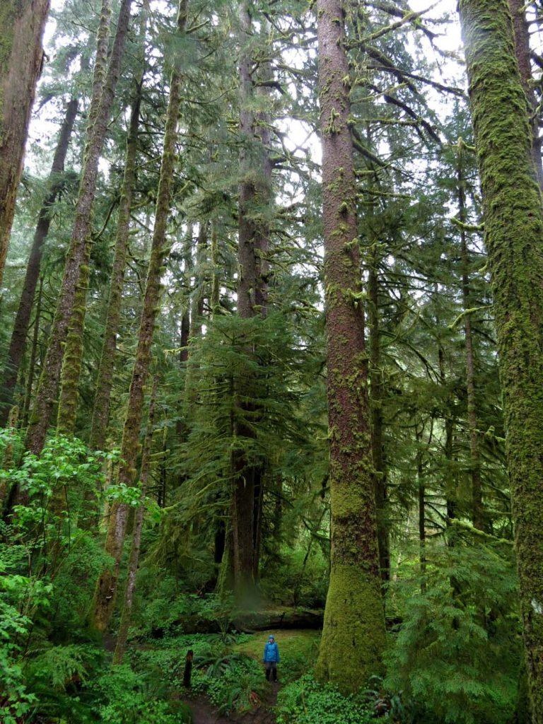 Carmanah Walbran Provincial Park - Tall trees