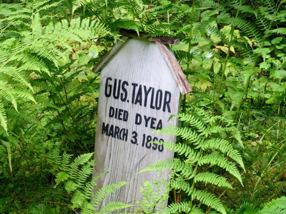 A wooden headstone surrounded by ferns