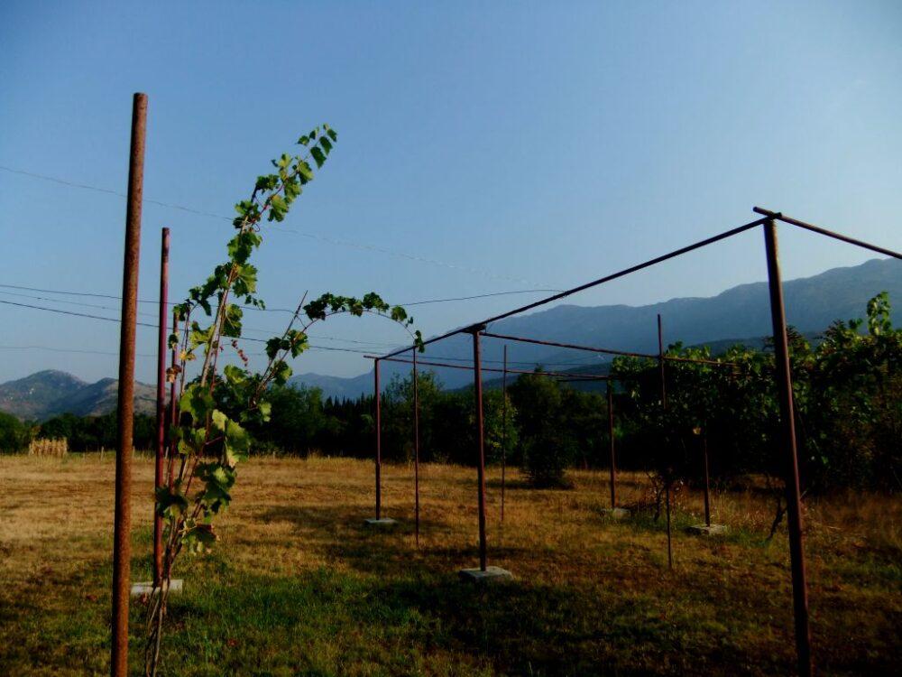 vineyard camping below ostrog