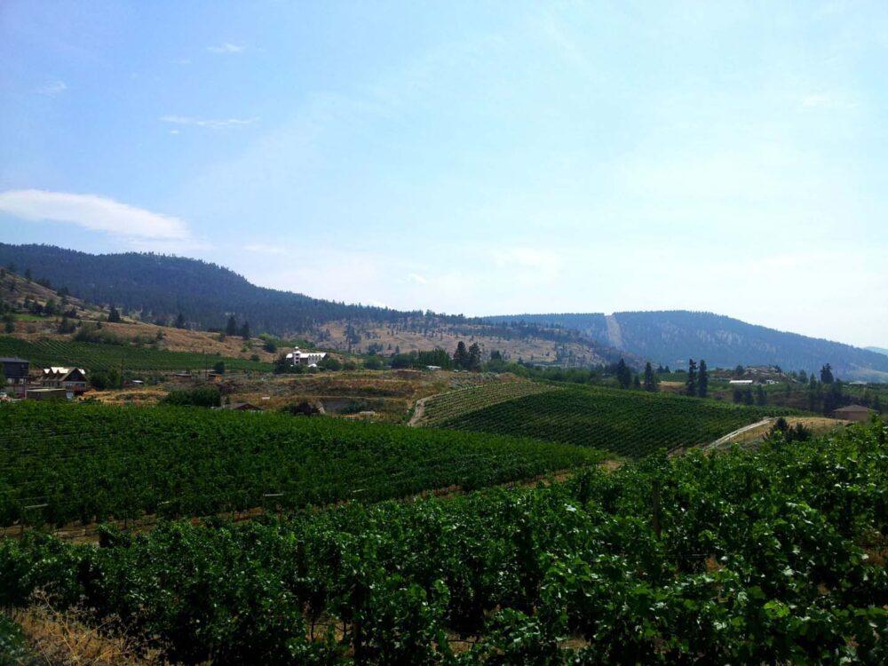 Hills covered in vines, Okanagan Valley
