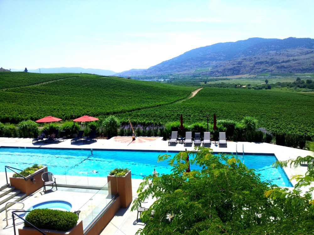 Swimming pool surrounded by vineyards at Burrowing Owl Estate Winery