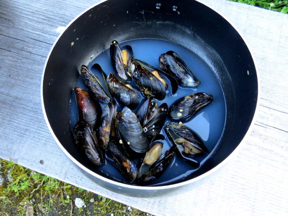 Mussels collected in pot in Desolation Sound