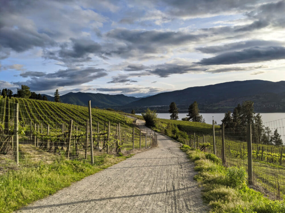 View of KVR Trail winding through vineyards near Penticton, with sunset light and Okanagan Lake in background