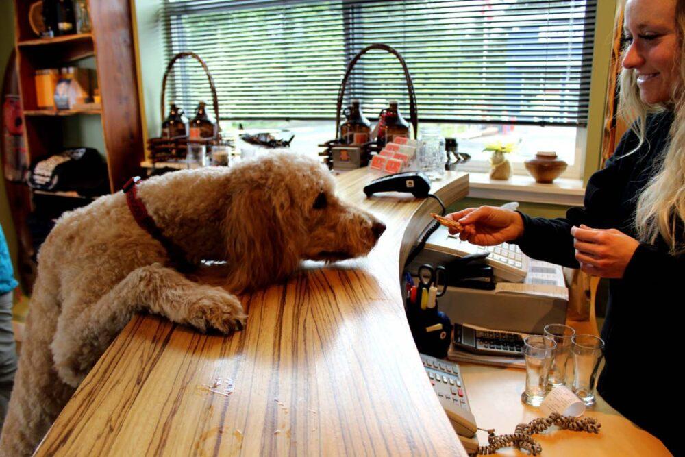 longwood brewery milo dog tasting