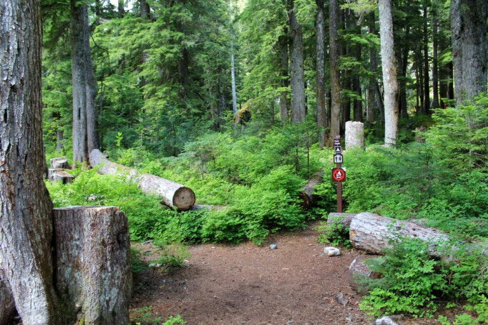 Campground signs with toilet directions and fallen logs