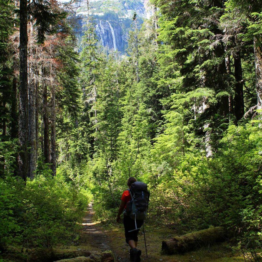vancouver-island-della-falls-hike-rainforest