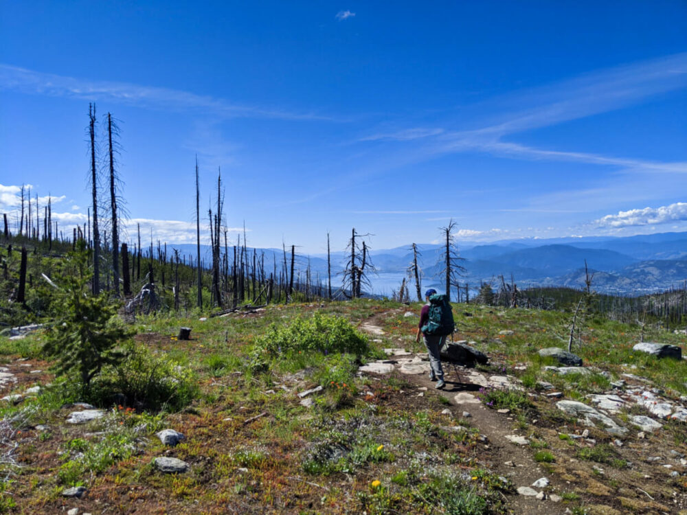 Gemma is hiking away from the camera on dirt and rock trail, with views looking down to Okanagan Lake in the background. There are a number of burnt tree stumps near the path