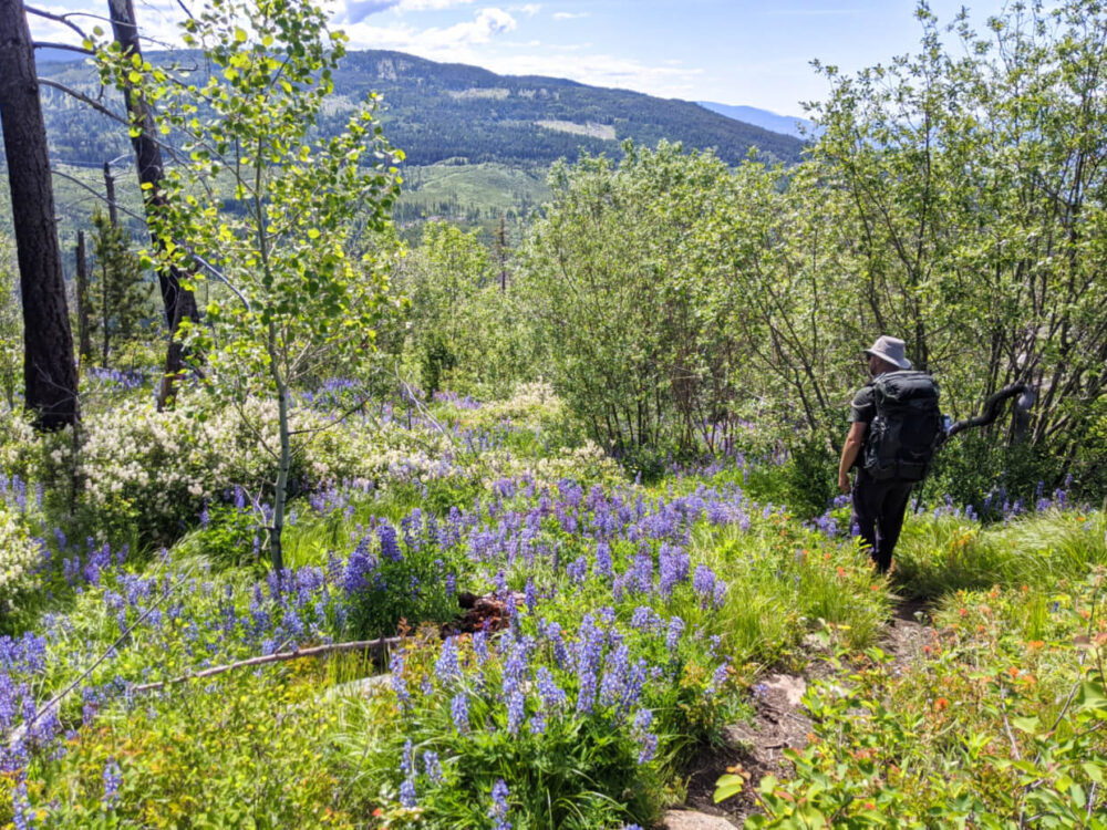 JR walks on narrow dirt hiking path through grassy area filled with bright purple wildflowers. The path is also lined by small trees