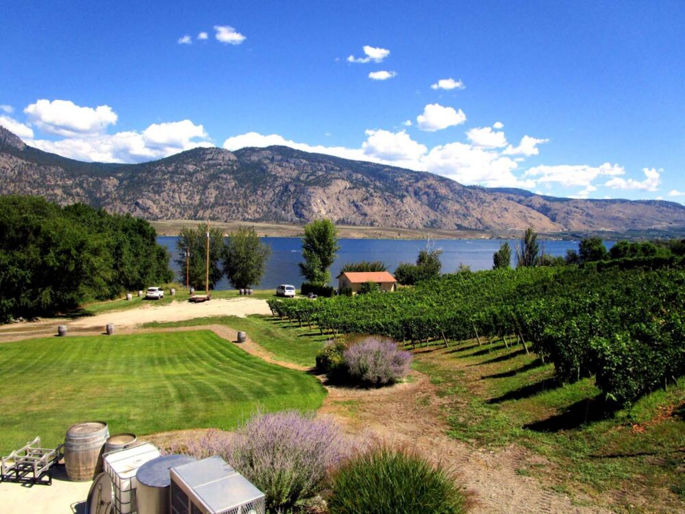 Vineyards sloping to Osoyoos Lake with sunburnt hills in background