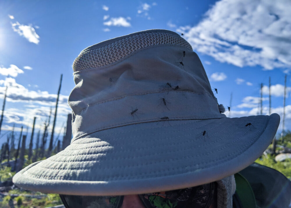 Close up of light green coloured outdoor hat with eleven mosquitoes sat on it