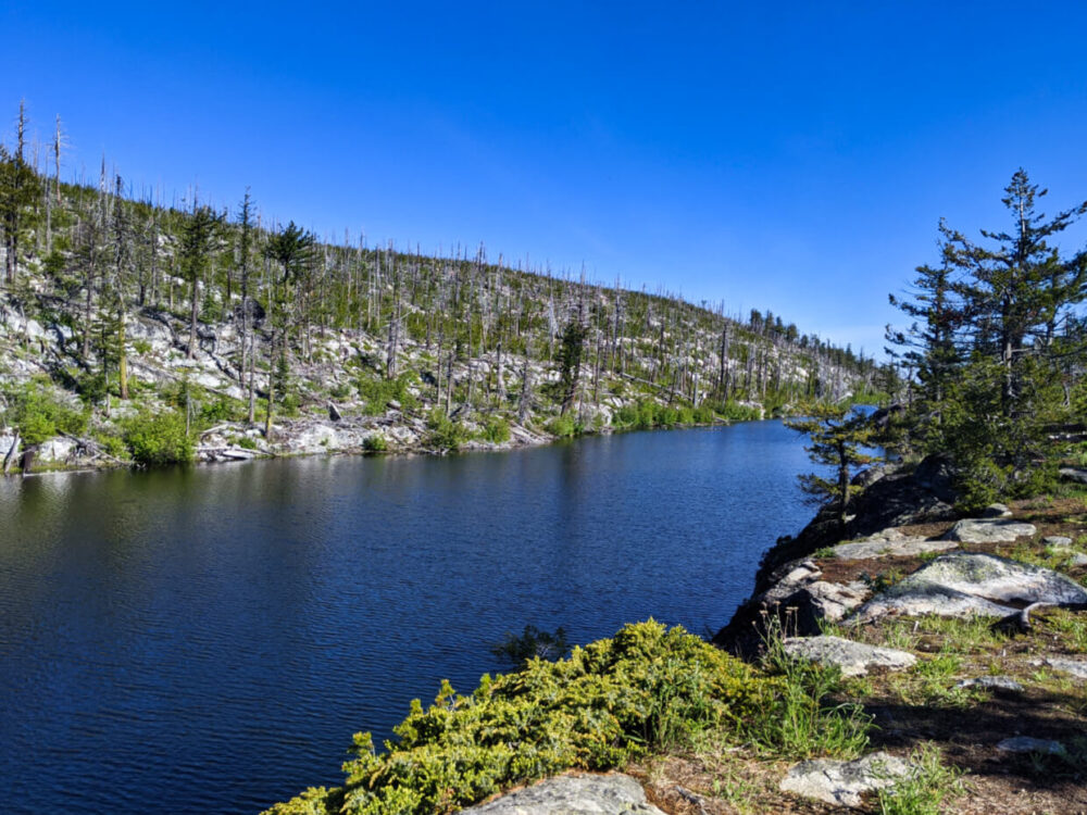 Looking down the shoreline of Divide Lake, which sits around 10m below, lined by tree stumps