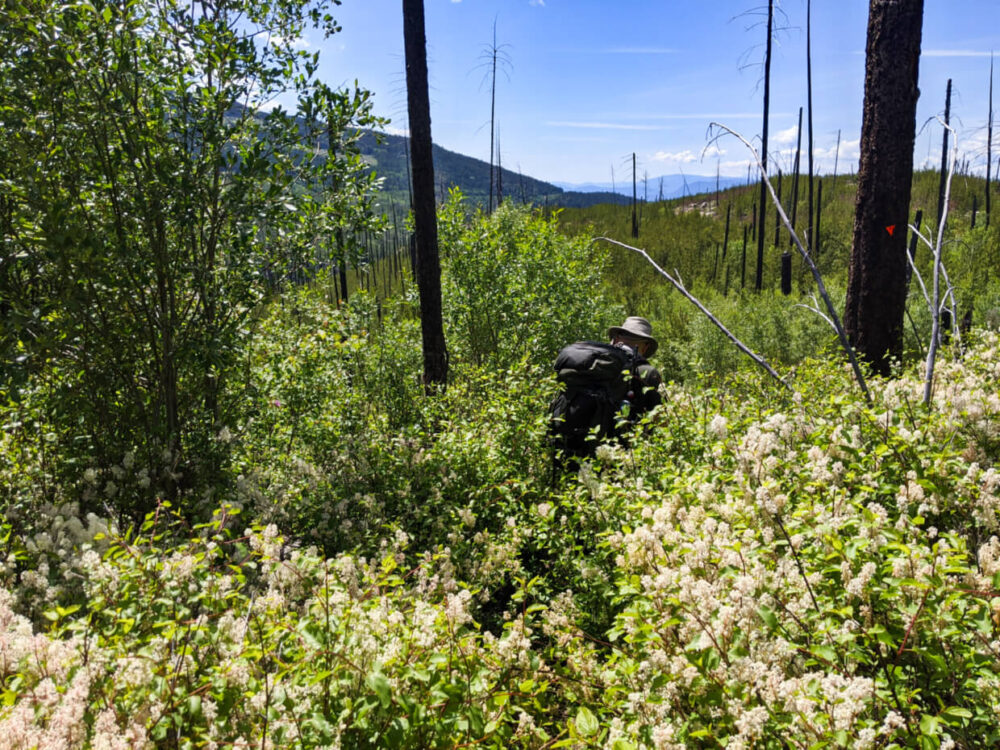 View of overgrown foliage on hiking trail with the top half of JR just visible above blossoms and brush