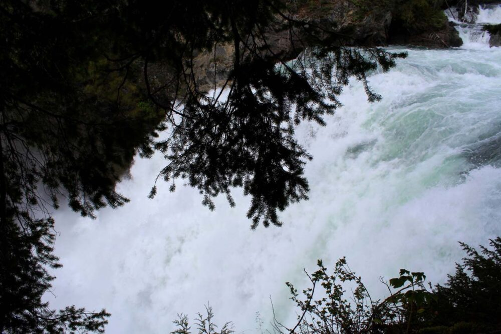 Looking through the trees to Cariboo Falls, a raging torrent of water