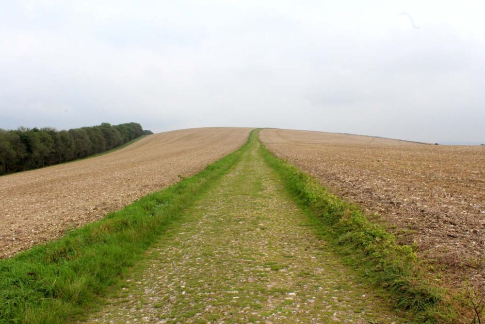 Walking the South Downs Way - Roman road