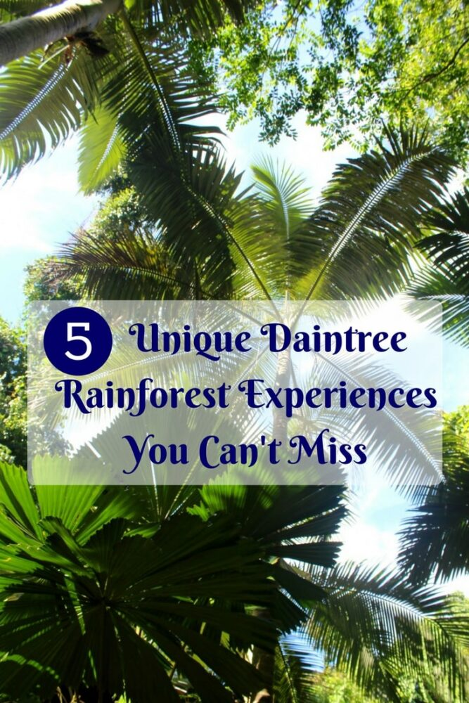 5 Unique Daintree Rainforest Experiences You Can't Miss - Rainforest walls, Wildlife, Beaches, Local Food and sleeping under the rainforest canopy