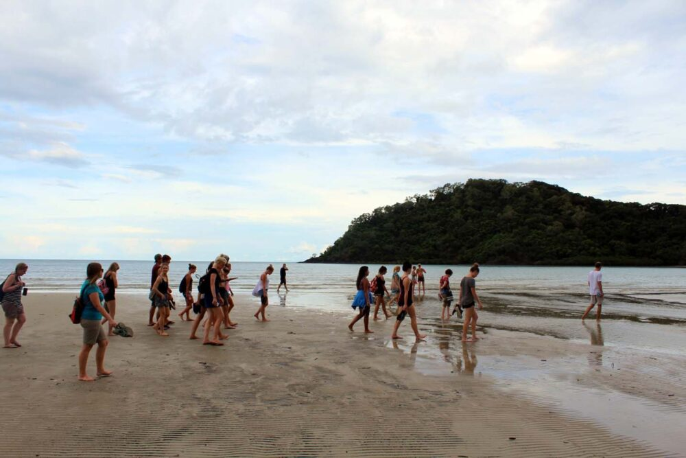 cape trib beach house rainforest walking tour