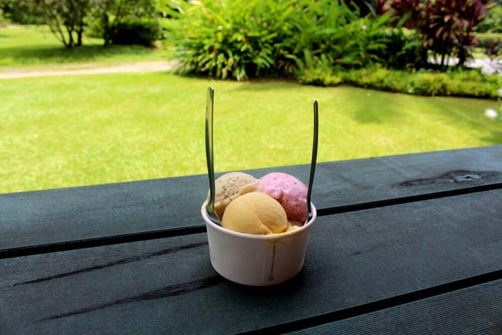 daintree ice cream company farm far north queensland