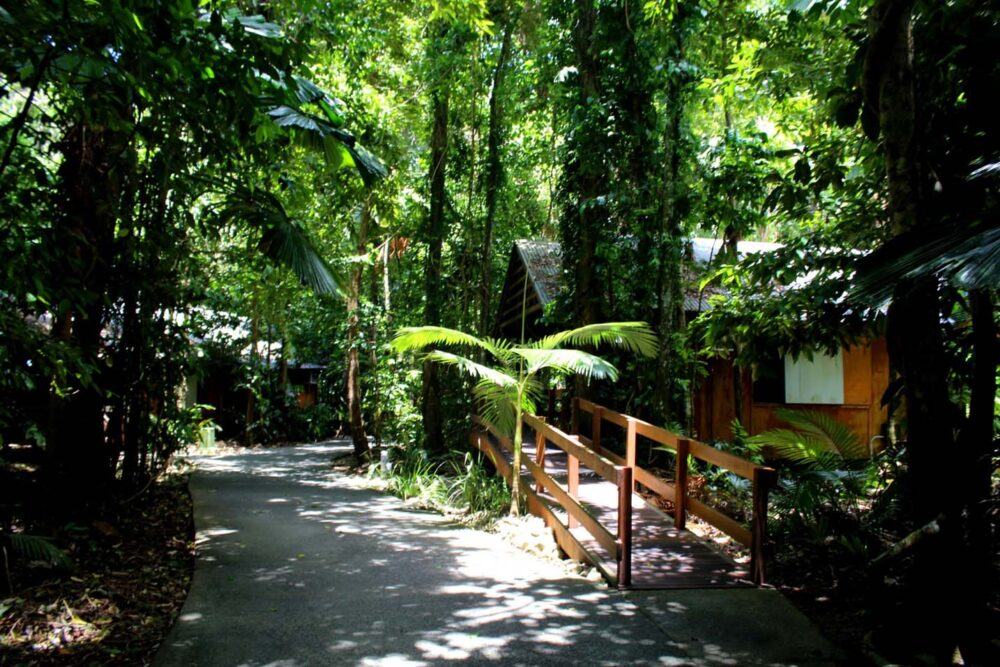 rainforest cabins at cape trib beach house Daintree