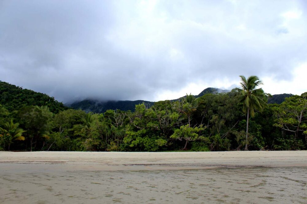 rainforest meets beach cape trib beach house daintree